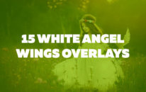 15 White Angel Wings Overlays